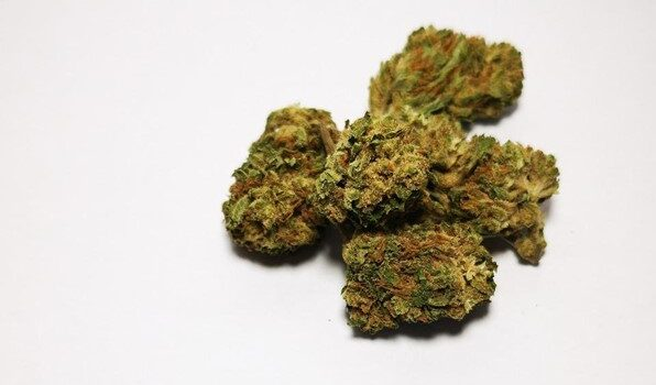 cbd flower strain