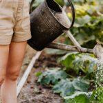 revitalize your garden