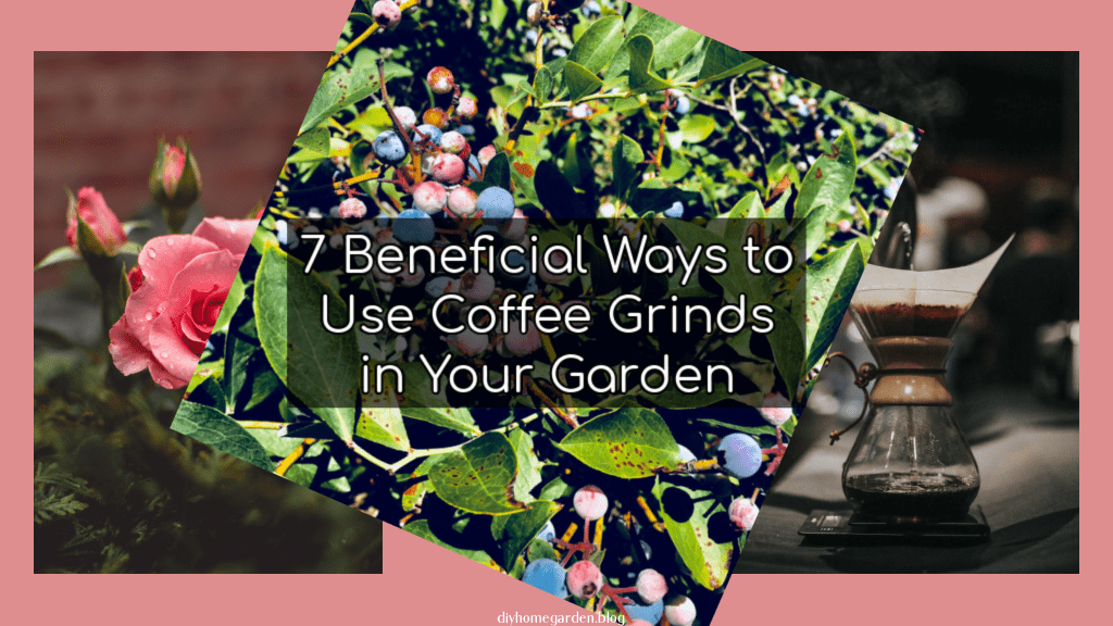 7 Beneficial Ways to Use Coffee Grinds in Your Garden