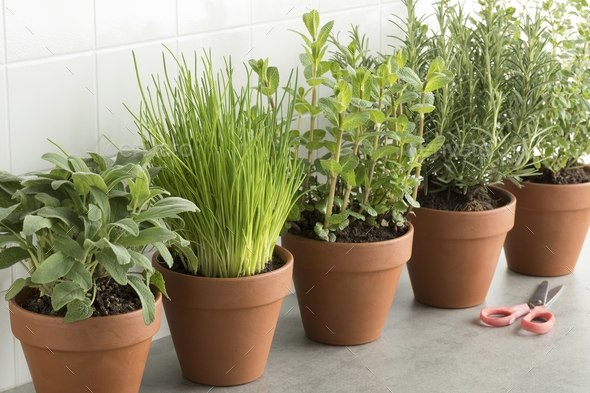 Are Terra Cotta Pots Useful for Gardening?