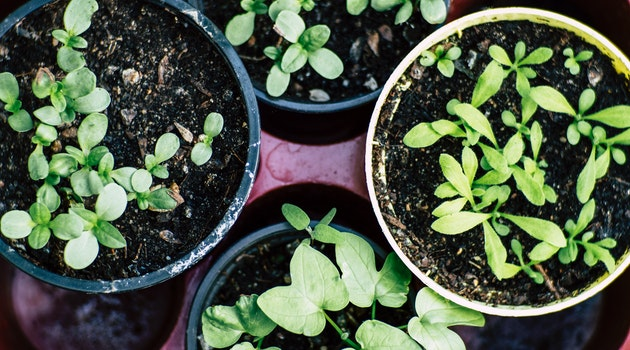 4 of the Best Herbs to Grow in Your Garden