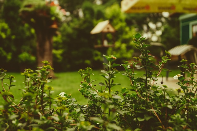 How To Start a Garden Renovation on a Clean Slate