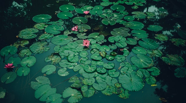 4 Useful Tips to Increase Your Garden Pond Health