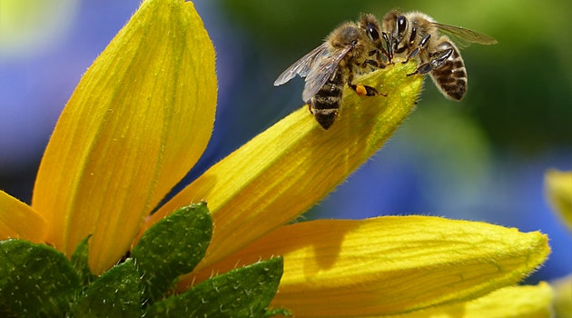 6 Humane But Super Effective Bee Removal Tips