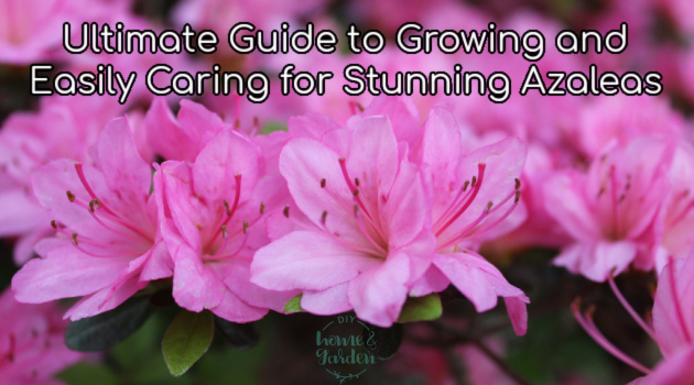 Ultimate Guide to Growing and Easily Caring for Stunning Azaleas