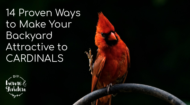 14 Proven Ways to Make Your Backyard Attractive to Cardinals