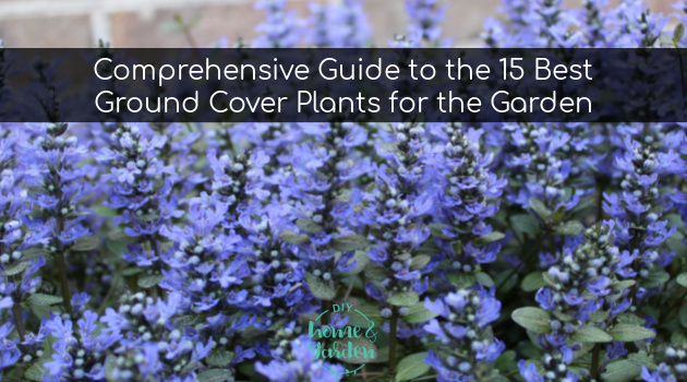 Comprehensive Guide to the 15 Best Ground Cover Plants for the Garden