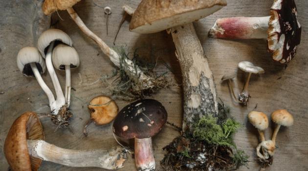 3 Underappreciated Health Benefits of Eating Mushrooms