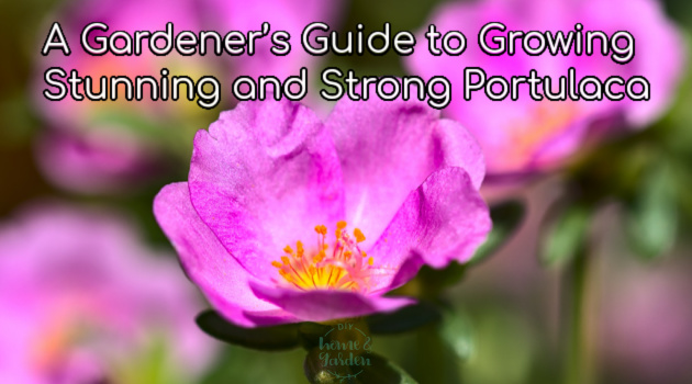A Gardener's Guide to Growing Stunning and Strong Portulaca