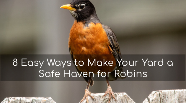 8 Easy Ways to Make Your Yard a Safe Haven for Robins