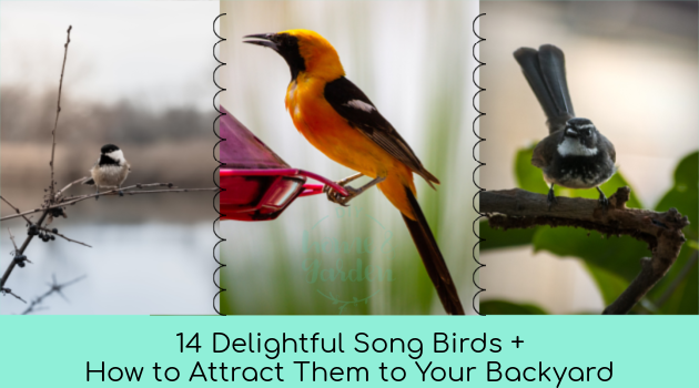14 Delightful Song Birds and How to Attract Them to Your Backyard