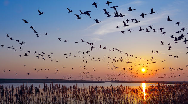 6 Helpful Ways You Can Assist Bird Migration