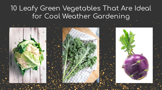 10 Leafy Green Vegetables That Are Ideal for Cool Weather Gardening