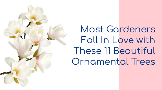 Most Gardeners Fall In Love with These 11 Beautiful Ornamental Trees