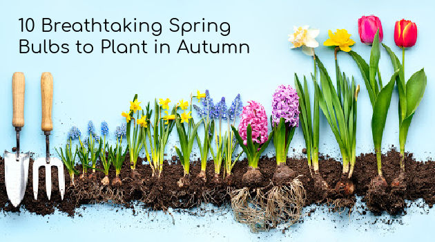10 Breathtaking Spring Bulbs to Plant in Autumn