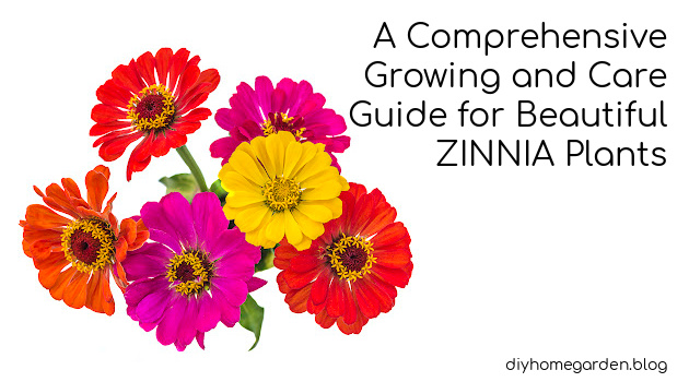 A Comprehensive Growing and Care Guide for Beautiful Zinnia Plants